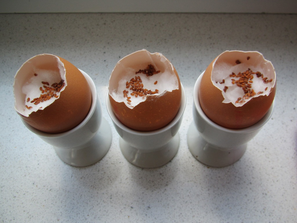 Planting cress in egg shells for Easter / tuinkers in eierschalen voor Pasen // VAN BRITT