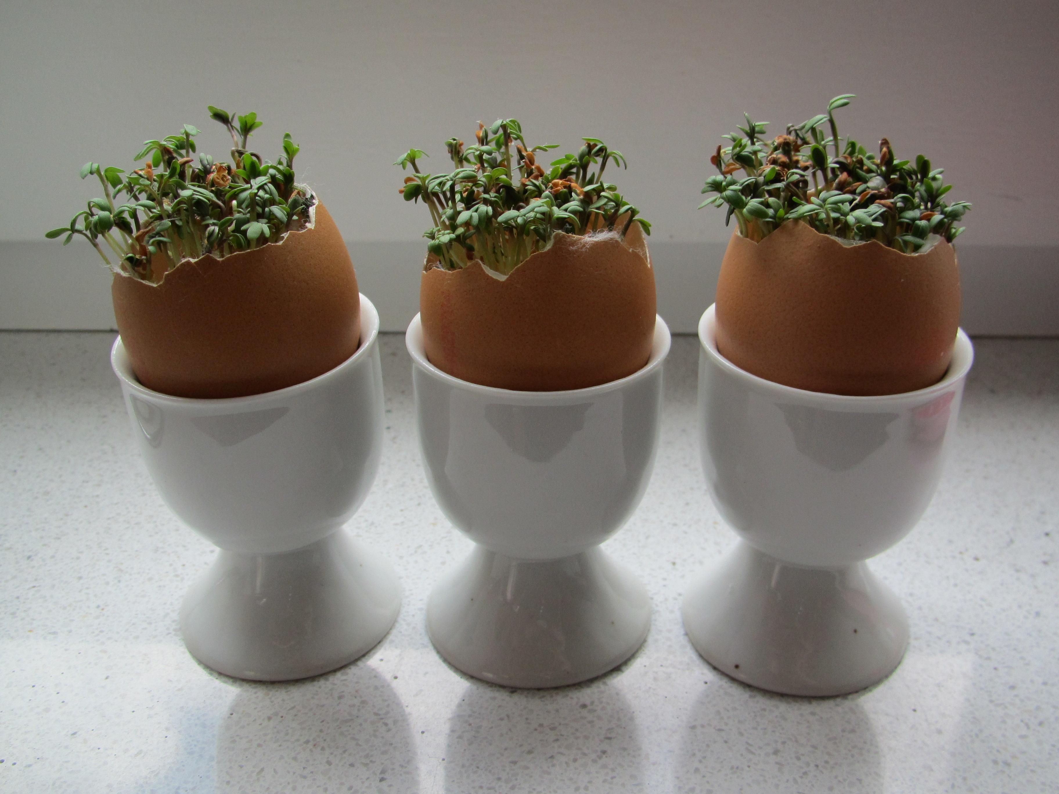 Planting cress in egg shells for Easter / tuinkers in eierschalen voor ...: vanbritt.nl/index.php/2014/04/pasen-2014